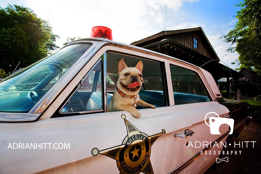 Dog Photographer - Adrian Hitt - Nashville, TN - French Bulldog