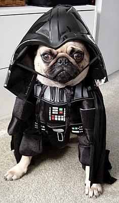 darth-vader-dog