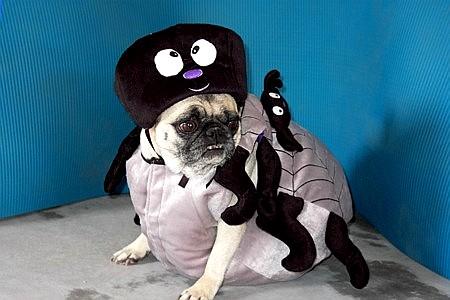 f-spider-dog