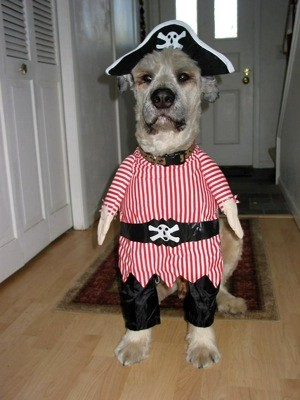 i-pirate-dog