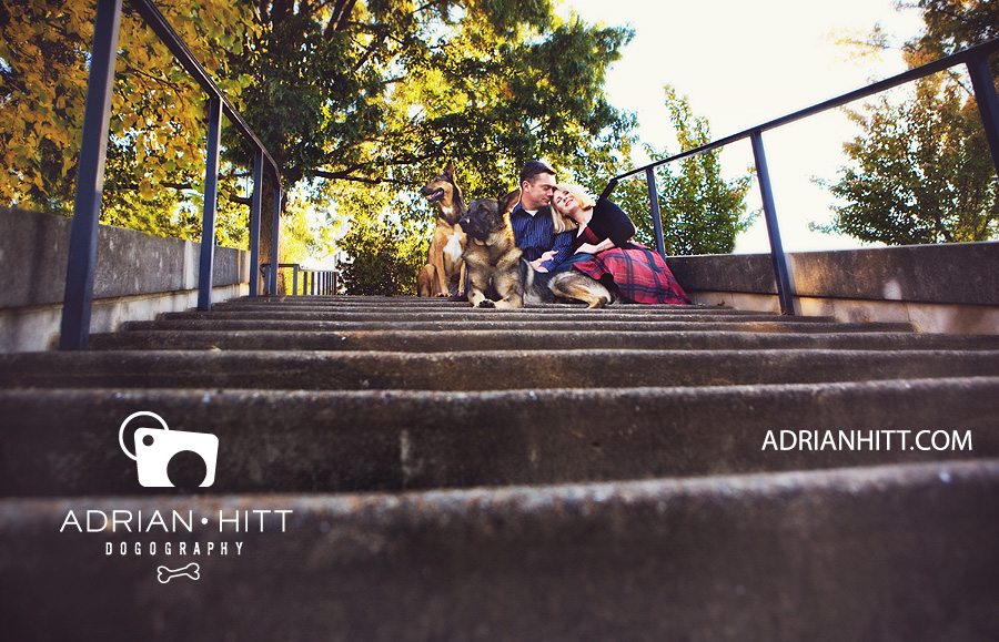 Dog Photographer German Shepherd Nashville, TN Adrian Hitt