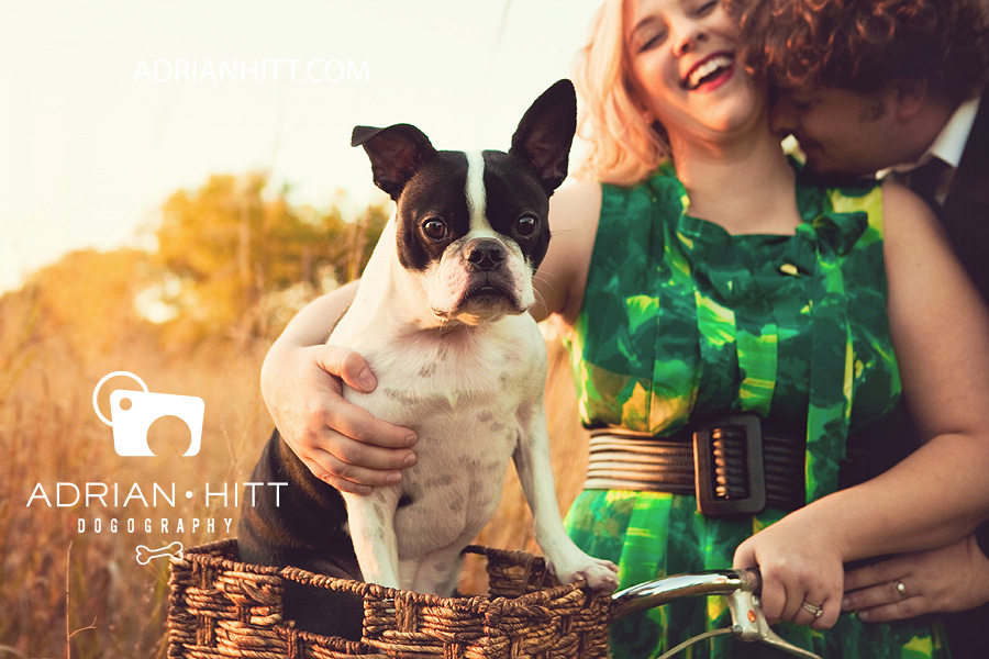 Dog Photographer Nashville, TN Adrian Hitt Boston Terrier