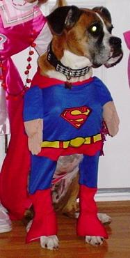 superboxercrop