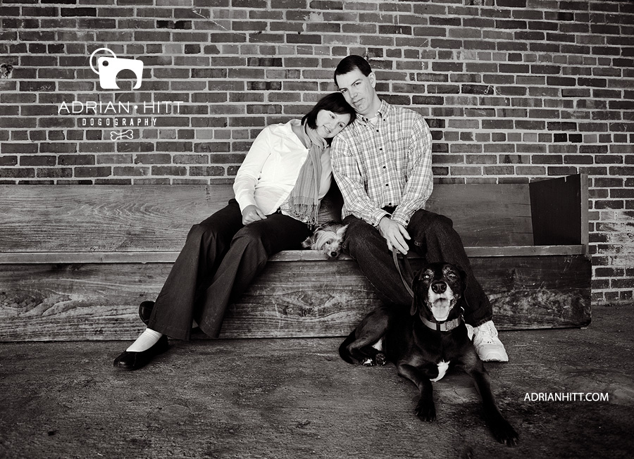 Dog photographer Adrian Hitt Nashville, TN