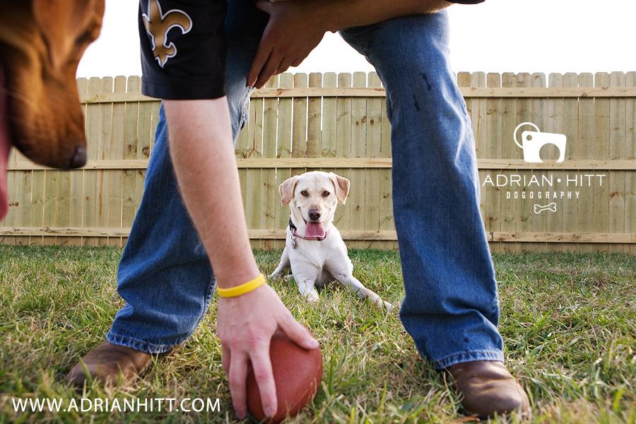 Dog Photographer Nashville tn