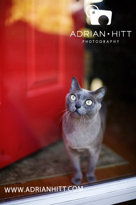 Pet Photographer, Nashville, TN Adrian Hitt Photography