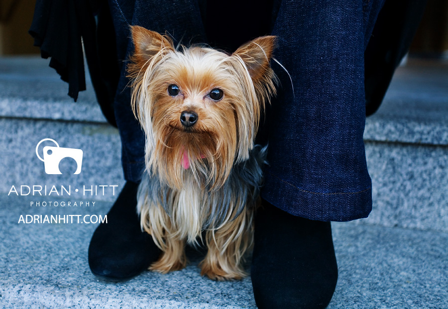 New York City Dog Photographer Adrian Hitt