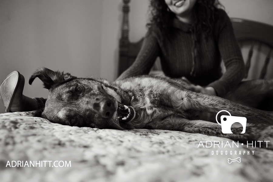 Pet Photographer Nashville, TN Adrian Hitt
