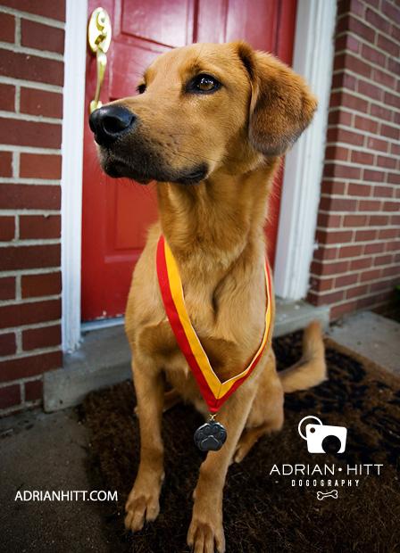 Dog Photographer Nashville, TN Adrian Hitt