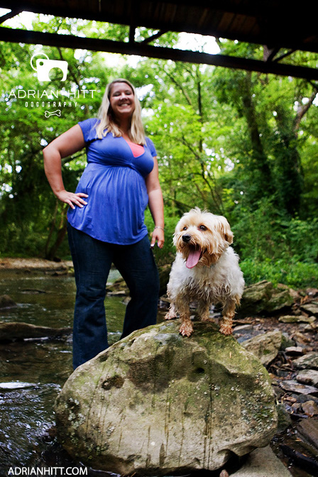Nashville, TN dog photographer