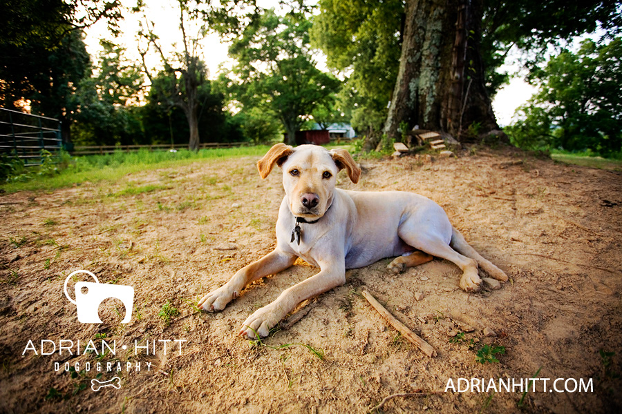 Dog Photography Nashville, TN Adrian Hitt