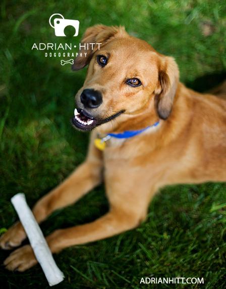 Dog Photographer Adrian Hitt Nashville, Tn