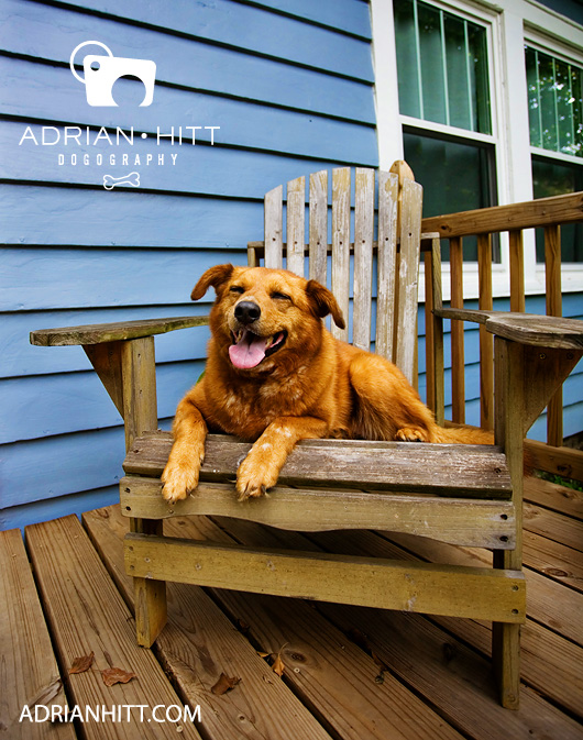 Dog Photographer Nashville, TN Adrian Hitt