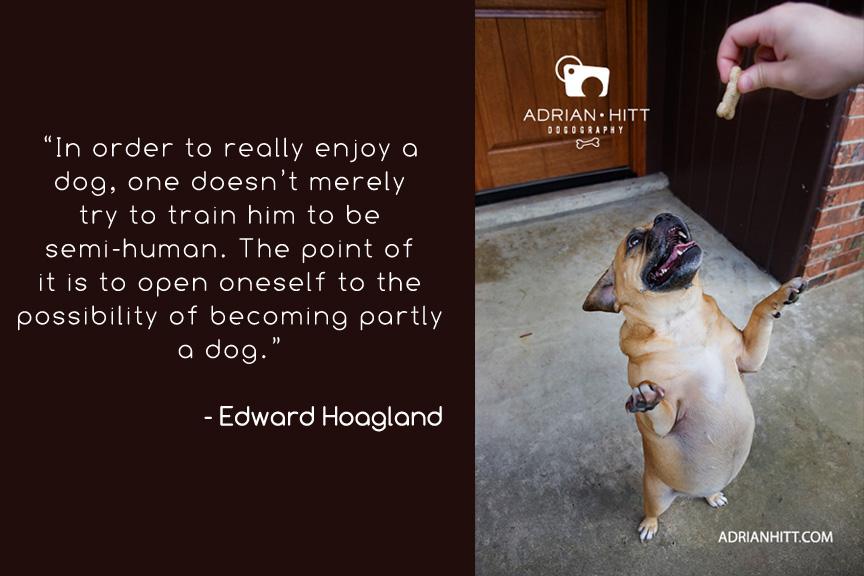 dog wisdom Pet photographer Nashville, TN Adrian Hitt
