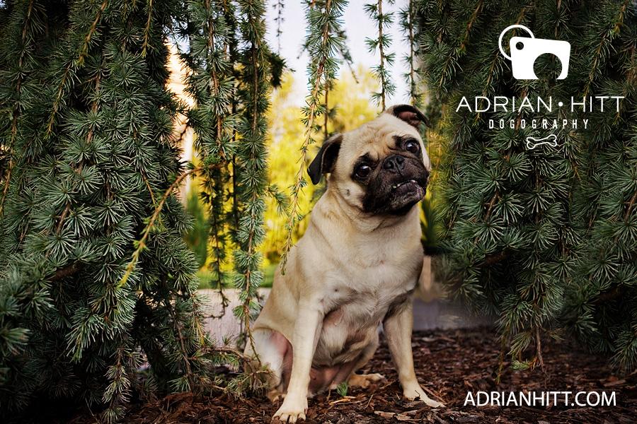 Pet Photographer Nashville, TN Adrian Hitt