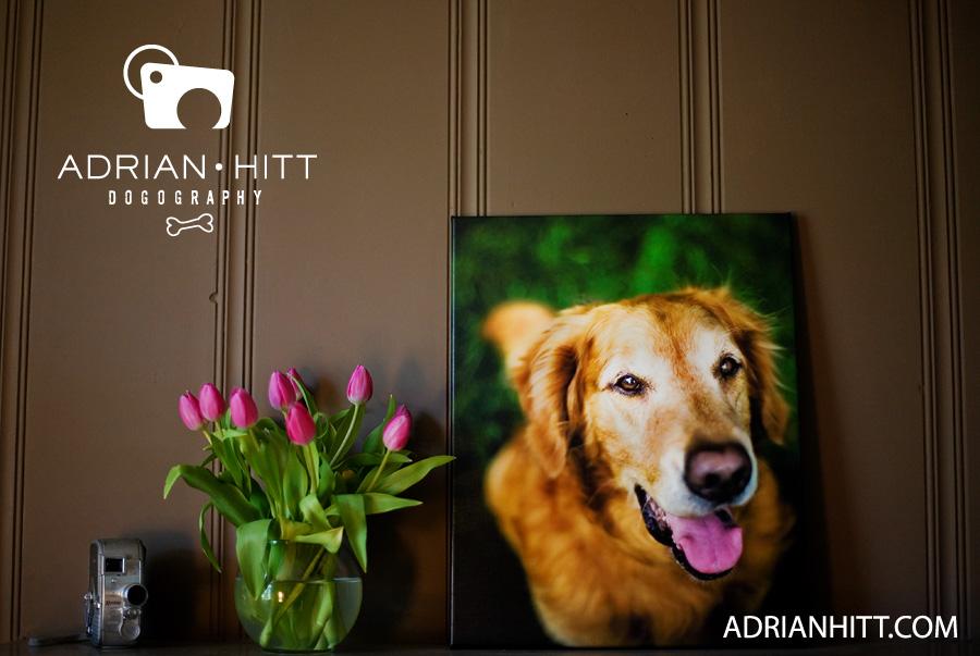 Photographer Nashville, TN Adrian Hitt