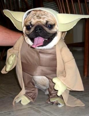 f-yoda-dog