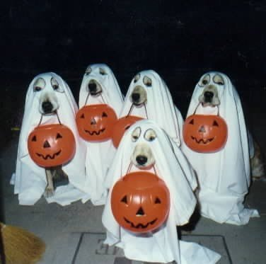 ghost-dogs