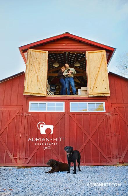 Dog Photographer Labrador Retriever Adrian Hitt Nashville, TN
