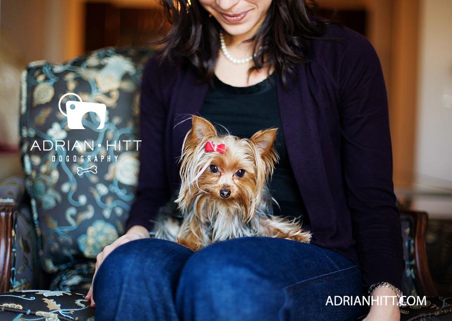 Teacup Yorkie New York City Dog Photographer