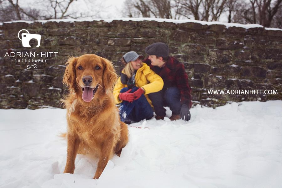Golden Retriever Dog Photographer, Nashville, TN Adrian Hitt Photography