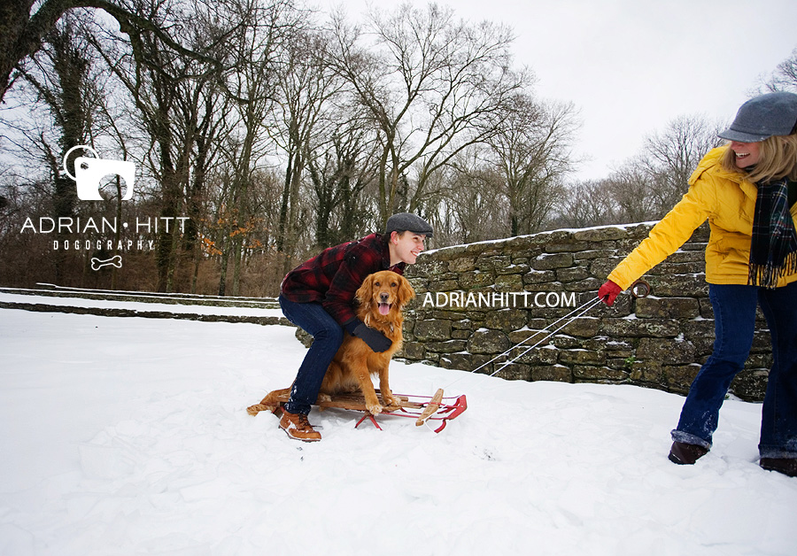 Golden Retriever Dog Photographer Lifestyle Nashville, TN