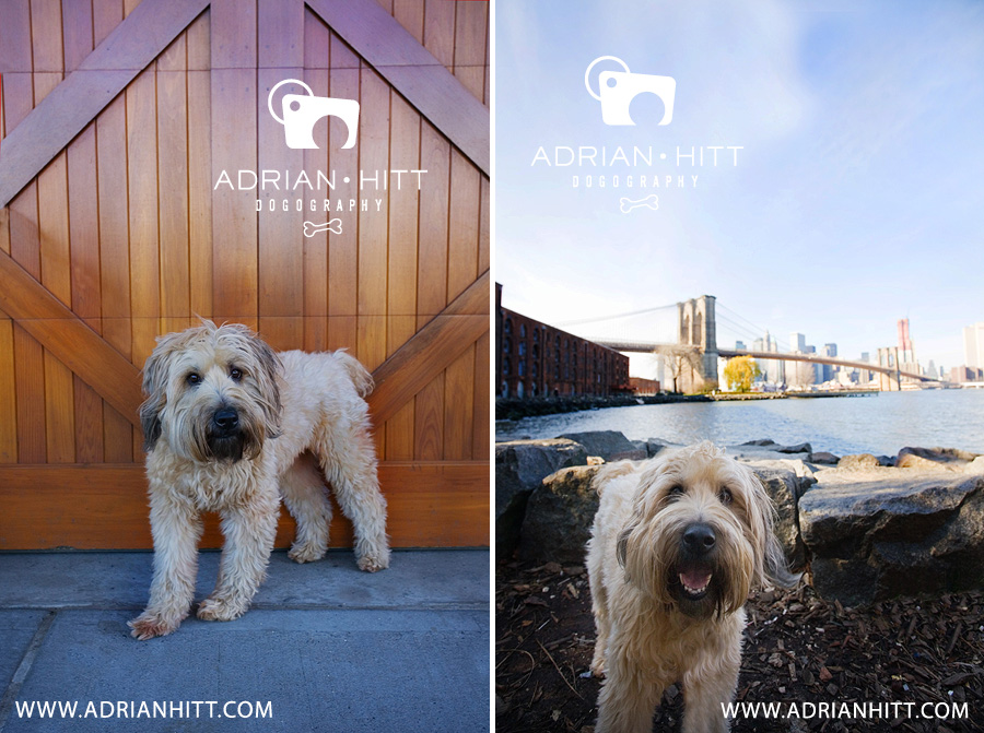 Dog Photography, Nashville, TN Adrian Hitt Photographer