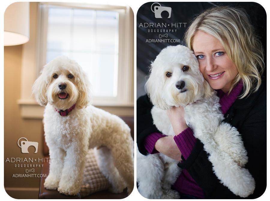White Cockapoo � Pet Photography � Dog Photographer Adrian Hitt ...